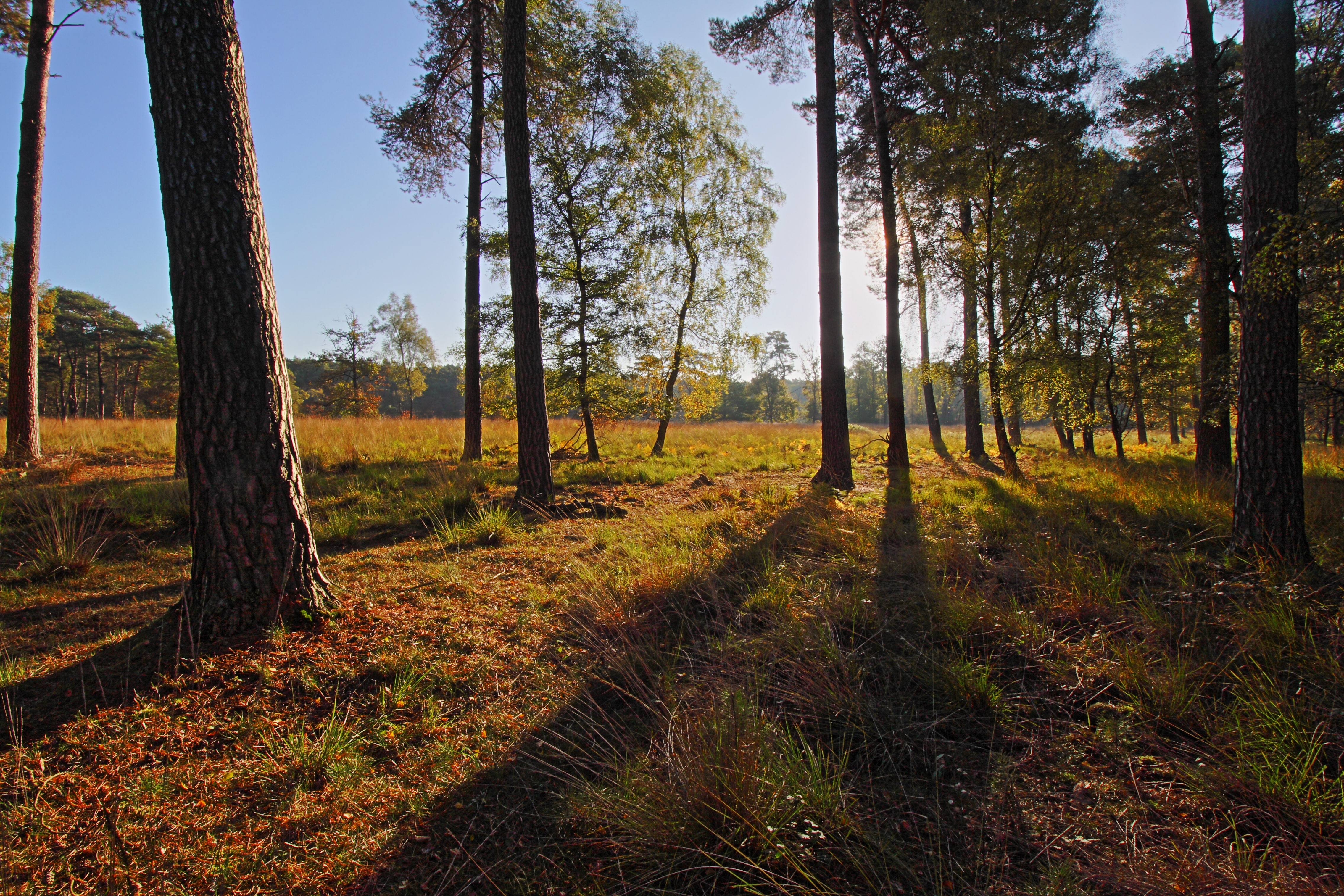 Die Sonne scheint am frühen Morgen zwischen den Bäumen hindurch