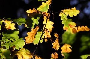 Die ersten Farben im Blätterwerk