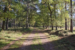 Waldweg im Sonnenlicht