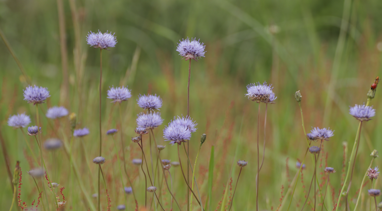 Blaue Blumen am Wegesrand